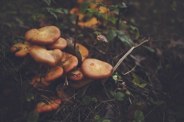 Сначалом сезона многие тюменцы попали в клинику из-за отравления грибами