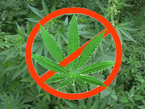 Безплідний союз марихуани зі сперматозоїдом