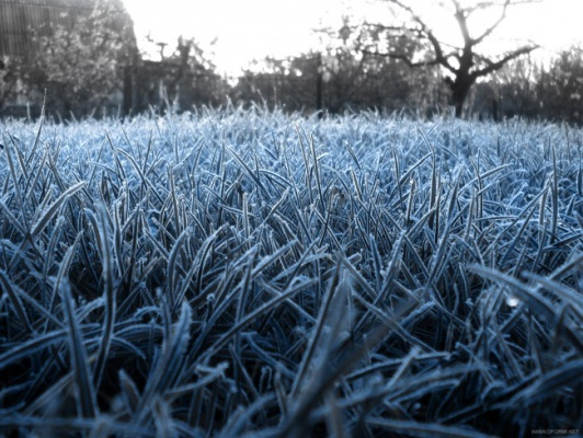 ВТюменской области ожидаются заморозки