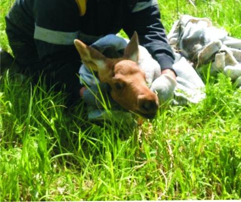 2-х маленьких лосят спасли связисты вТюменской области
