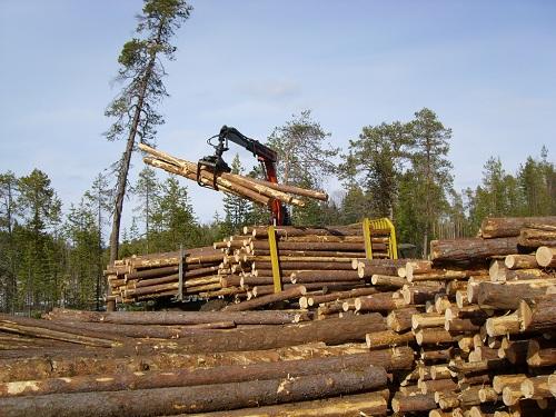 ВТюменской области развиваются инвестпроекты лесной индустрии