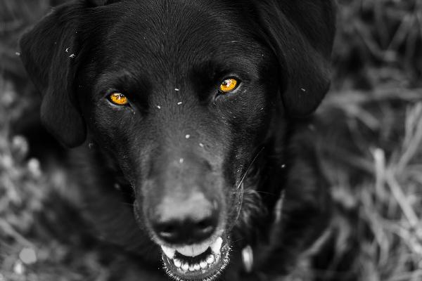 Возбуждено дело после нападения собаки вТобольске насотрудницу милиции